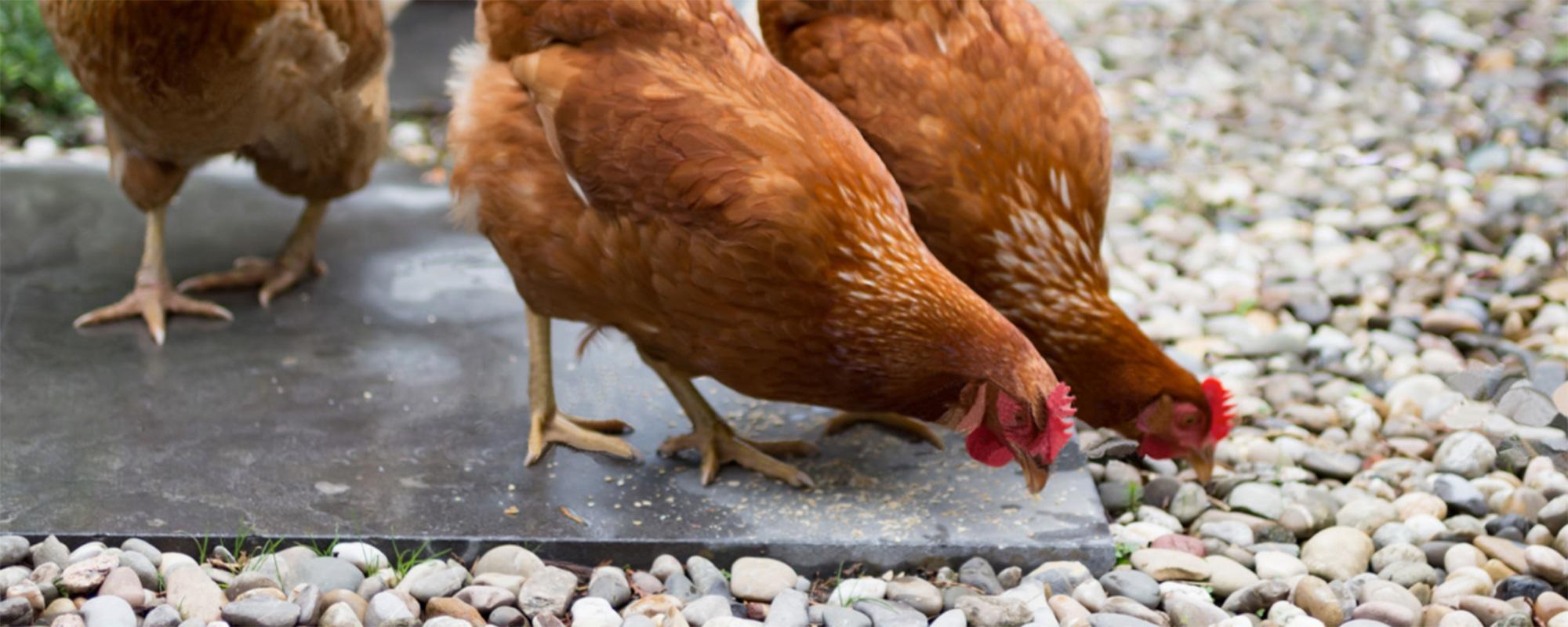 materiales para uso en la industria avícola